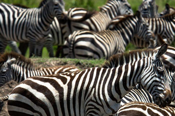 Tanzania Fauna Adventure
