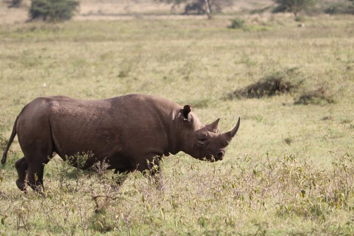 The rhino experience and Maasai Mara