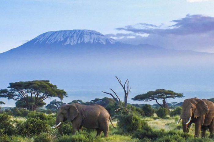 Mount Kilimanjaro view and elephants