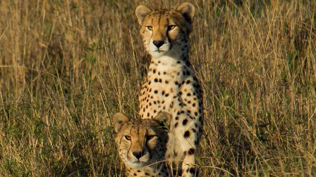Days Nights Tarangire National ParkSerengeti National Park - 9 things to see and do in serengeti national park