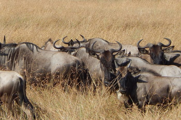 Best of South of Tanzania safari Package